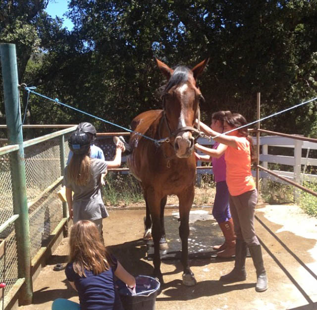 Dow Suenos Stables - Kayla has a Bath